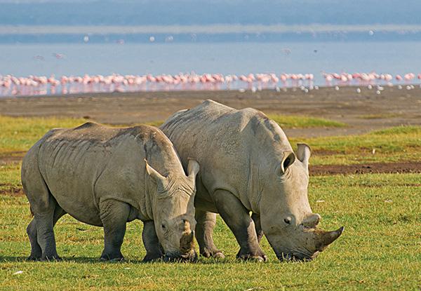 ケニア・タンザニア・ウガンダの観光 南部アフリカ観光ガイド 阪急交通社