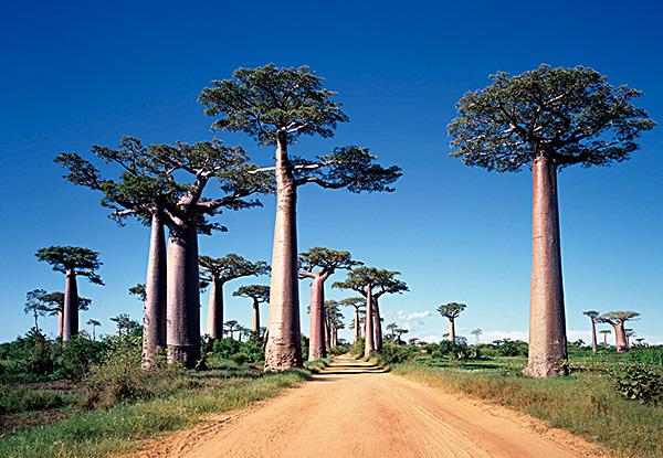 マダガスカルの観光|南部アフリ...