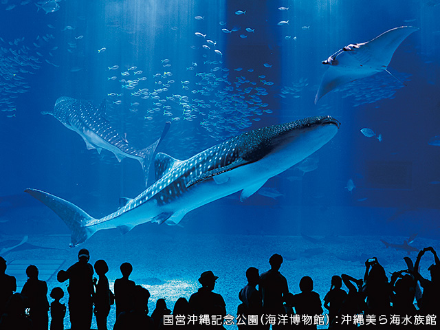 旅行会社が厳選!沖縄本島で人気・おすすめの観光スポット | 阪急交通社