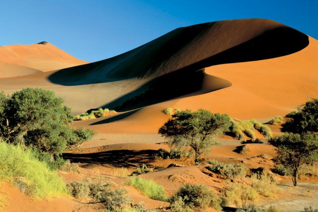 ナミブ砂漠の画像 p1_6