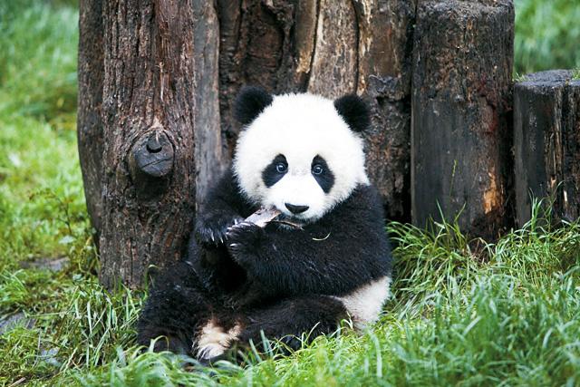 ジャイアントパンダ保護地域|中...