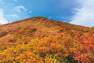 八ヶ岳 紅葉 ツアー